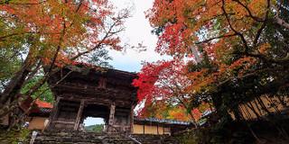 京都赏红叶攻略