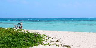 塞班岛旅游实用app推荐