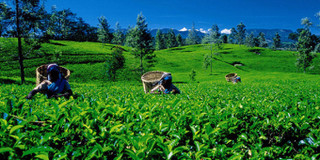 斯里兰卡必体验的11项活动