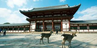 奈良寺庙攻略